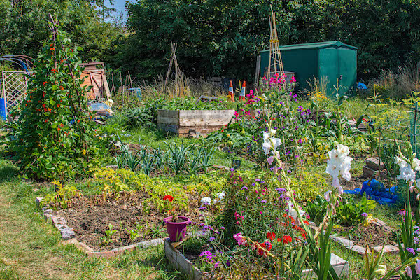 Help us crowdfund for our allotment toilet!